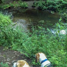 The Barend Beagles exploring Drumlanrig Castle